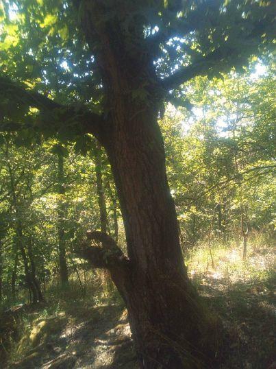 Baum neben dem Steinbaum