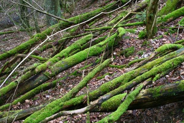 Mrtvé dřevo