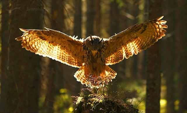 erotikhotel bayern bordelle in owl