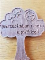 Quercus Robur - North