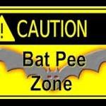 Ben's Pee Bats