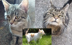 Maurice, Garfield, Maxl