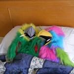 Paxo Parrot