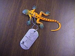 Dude the Travel Lizard
