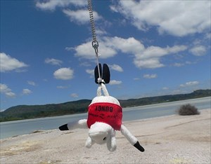 Bungy Sheep´s first jump in New Zealand