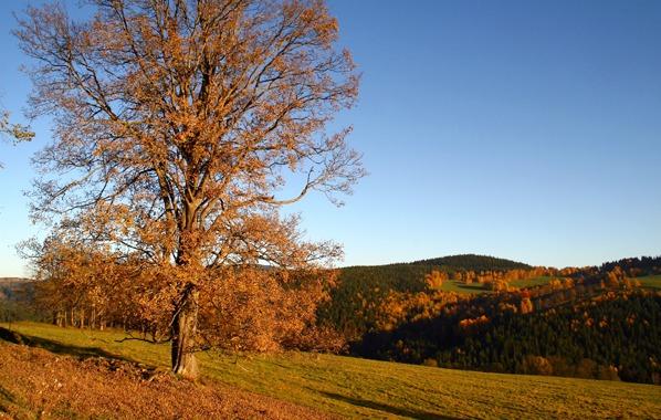 Lípa a Sedelský vrch