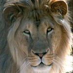 Team Rampant Lion