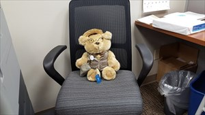 Orville, the friendly Office Bear!