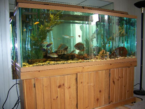 Aquarium backgrounds mirror ever used a mirror as a for Used fish tank