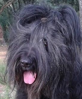 avatar de flp1959