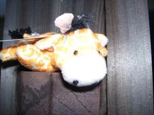 Gabriella Giraffe