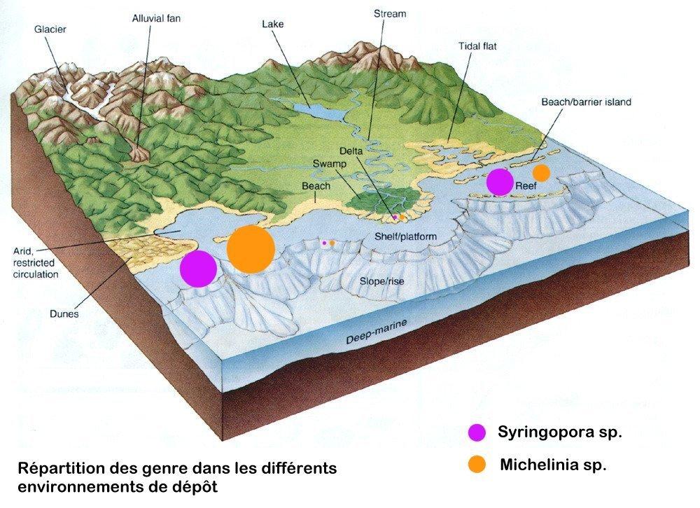Les milieux dans lesquels ont été découverts les coraux Michelinia et Syringopora