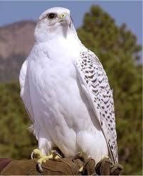 avatar de falcon672