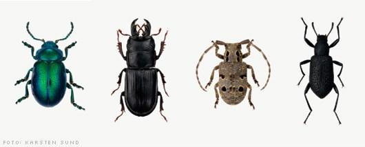 svarte biller i hus