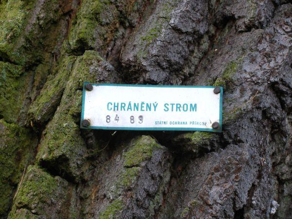 Pamatny strom I.