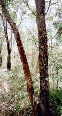 Harp up a tree