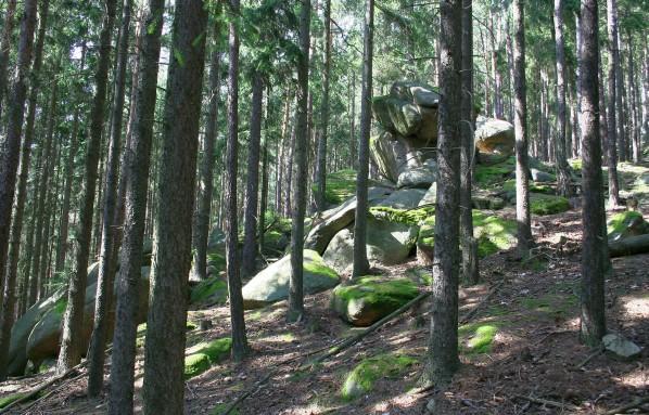 Mrazový srub v lese