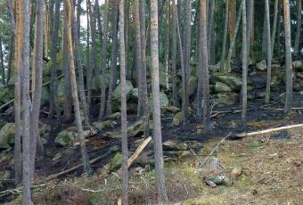 Les po požáru