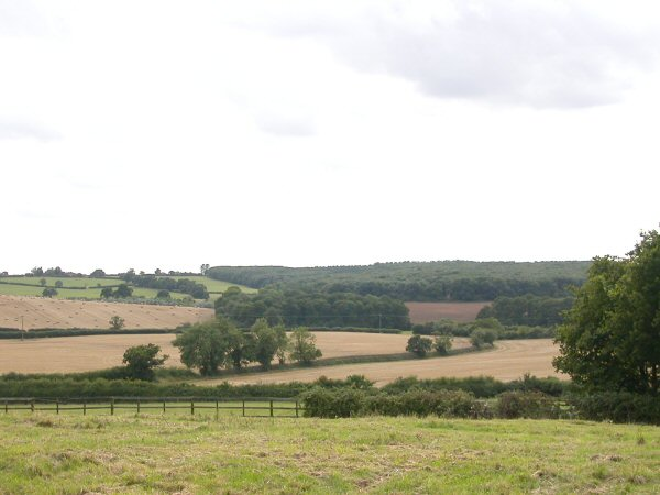 View of College Wood