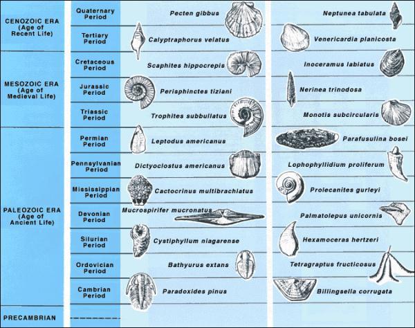 Fossile Zeittafel