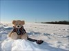 Mollybaer im Schnee