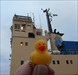 Duckie1 In Visby Harbour