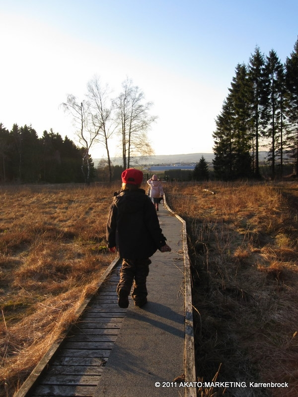 Schneifel Moor-Route | Hochmoorgebiet Rohrvenn - Auf dem Holzsteg zur Plattform