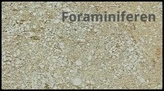 gc6ar6y fossile fassaden in berlin earthcache in berlin. Black Bedroom Furniture Sets. Home Design Ideas