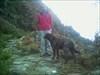el perro guia