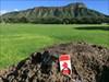 Ring Racer - Canada and Diamond Head Diamond Head as viewed from Kapi'olani Park.
