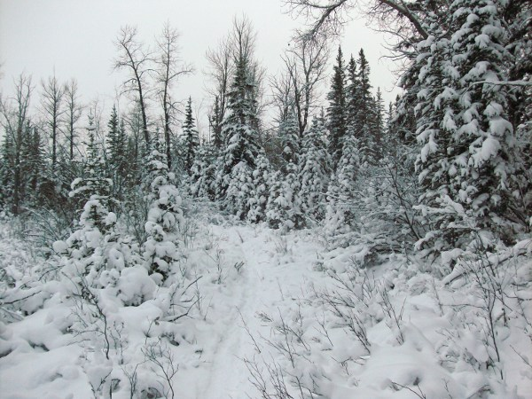 GC2JJ1M A Walk in the Weaselhead (Traditional Cache) in ...