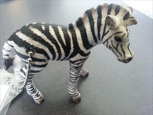 Zebrafreak's Zebra