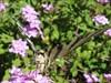 06 borboleta log image