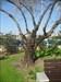 Árvore log image