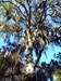 """Click to view """"Spanish Moss Monster"""