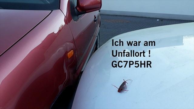 Gc7p5hr Die Kakerlake Und Der Autounfall Unknown Cache In