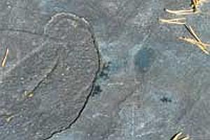 Carbon dating fossiileja ikä dating Hell punertava