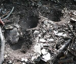 Pasti mravkolevů