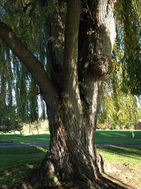 Gc6whxw Weeping Willow 2 Traditional Cache In New York United