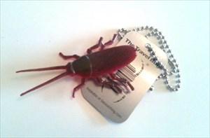 Cockroach TB