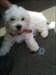 Snoopy mit Struppi