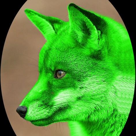 avatar de GFD Team