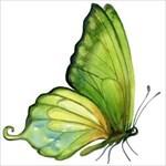 Green_Butterfly