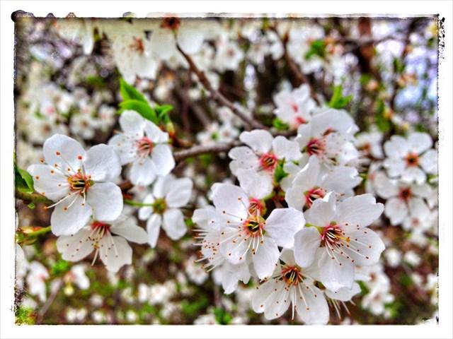 Frühlingserwachen an den Stolper Feldwegen