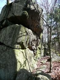 Mlady buk pod skalou