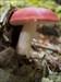 Mushroom #3 log image