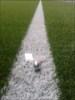 Fußballplatz SSV Walberberg
