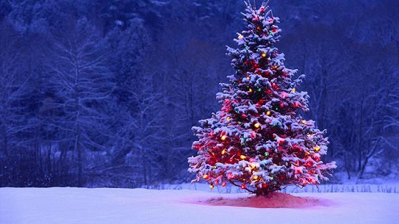 Gc42qma Rita S Christmas Tree 12 Night Cache Multi Cache In