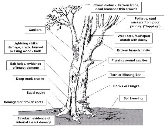 GC6GRRW Anatomy of a Tree (Traditional Cache) in New Jersey, United ...