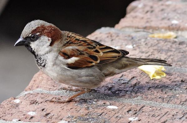 Wie heißt dieser Vogel?